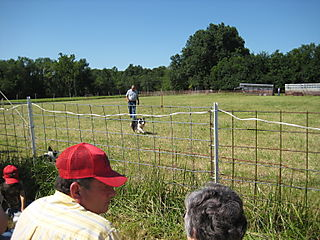 Bethel-sheepherding