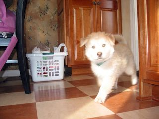 Monte at 11 weeks old